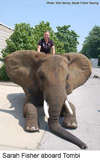 Sarah_elephant