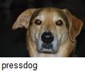 Pressdog_chester_caption