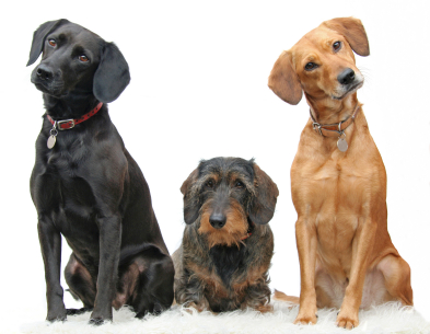 Dog 101: Important Facts About Dog Care